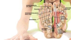مفاصل تشكيل دهنده كف پا